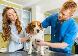 Що дає диплом ветеринара