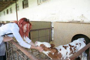 Технология производства и переработки продукции животноводства